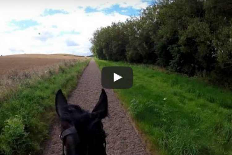 Starboard Watch on the gallops via AndyCam