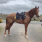 OUR LATEST SYNDICATE HORSE
